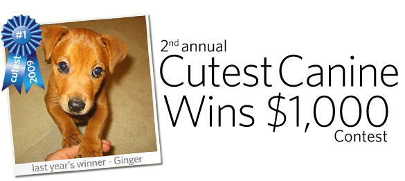 2nd annual Cutest Canine Wins $1,000 Contest